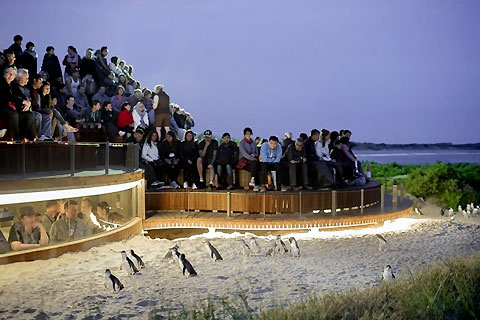 Paket 1 Day Phillip Island Afternoon Tour