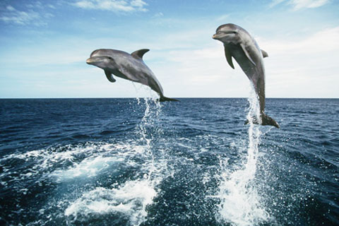 Paket Dolphin Watch Cruises (The Spirit of Jervis Bay)