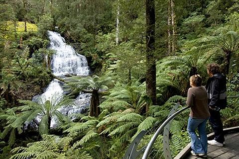 Paket 1 Day Great Ocean Road & Rainforest Tour