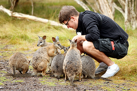 Paket 1 Day Phillip Island Ultimate Eco Tour
