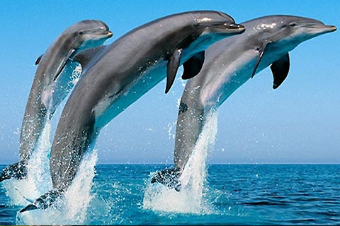 Paket Port Stephens Dolpin Tour & Dolphin Watch