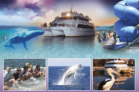 Paket Dolphin Watch Cruise - Moonshadow