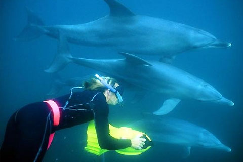 Paket Dolphin Swim Tour ex Perth Hotels