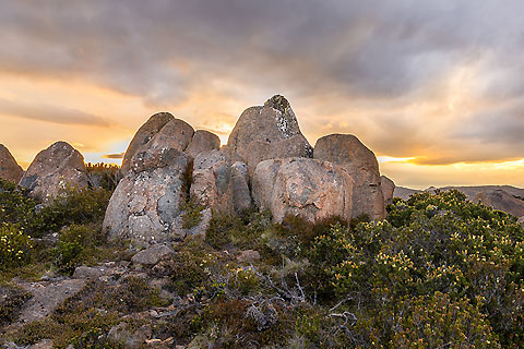 Paket Experience Tasmania - Grand Hobart with Richmond & Bonorong