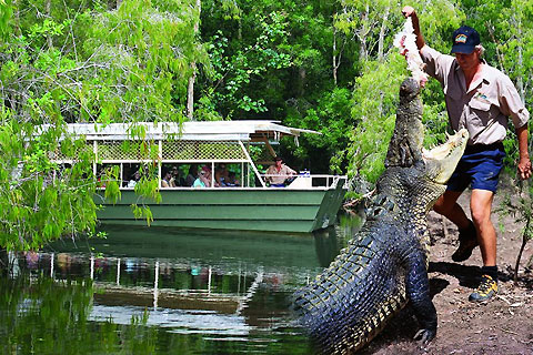 Paket Afternoon Hartleys Crocodile Adventure ex Cairns