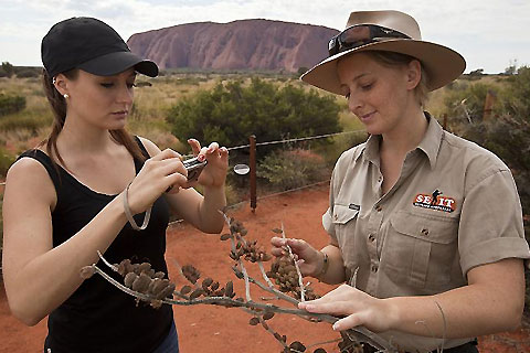 Paket SEIT Bush Tucker & Reptiles of the Red Centre