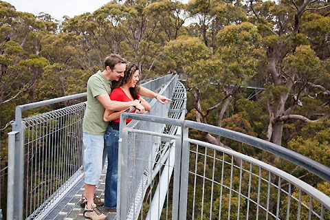 Paket Valley of The Giants Tree Top Walk with Lunch