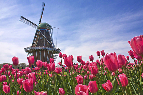 Paket Tour 4D/3N Explore Amsterdam - Paris