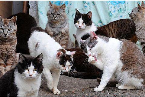 Yuk Berkunjung Ke Surga Kucing Di Jepang Yuktravel Com
