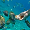 villa-ombak-FACILITIES-GLASS-BOTTOM-BOAT-SNORKELING